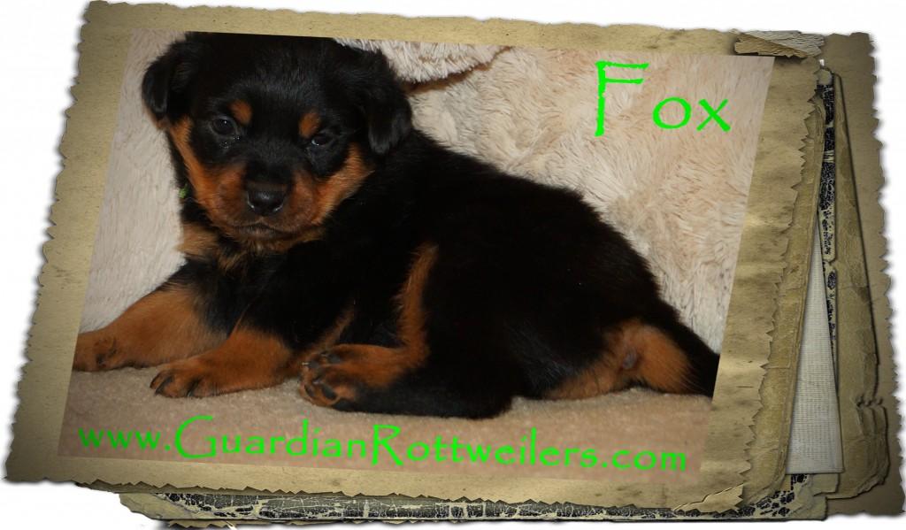 fox09
