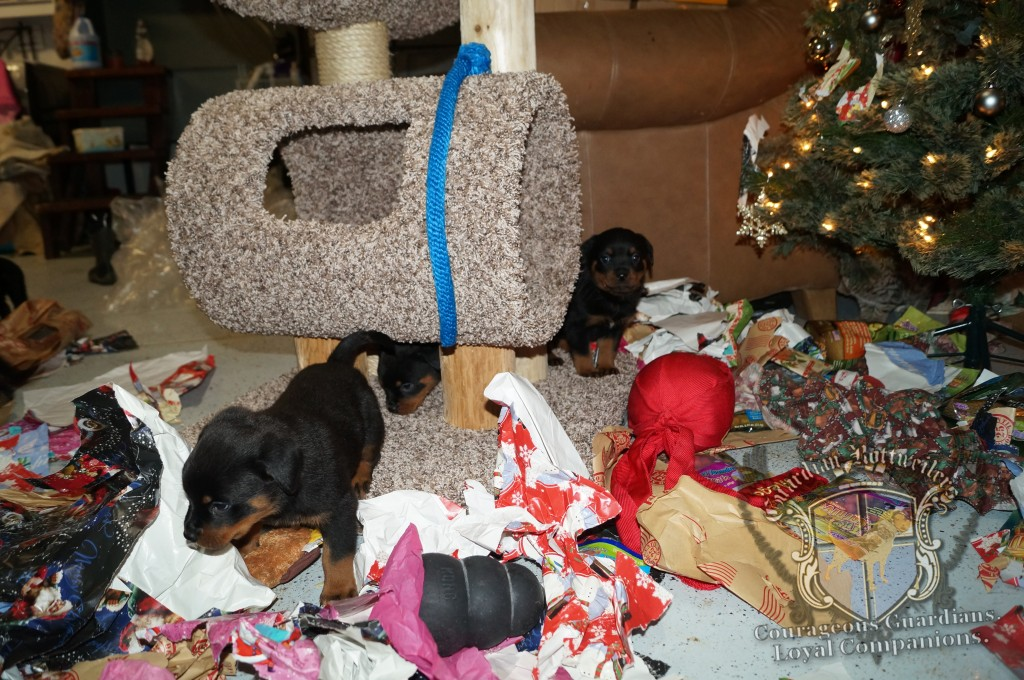 ChristmasMorning_2014_9928