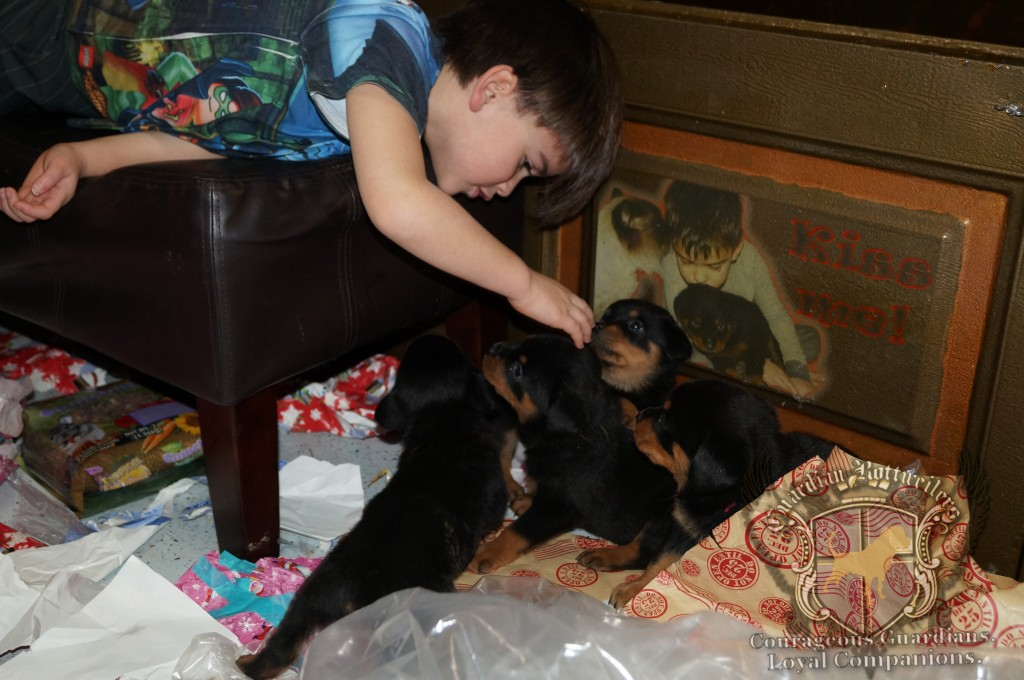 ChristmasMorning_2014_9930