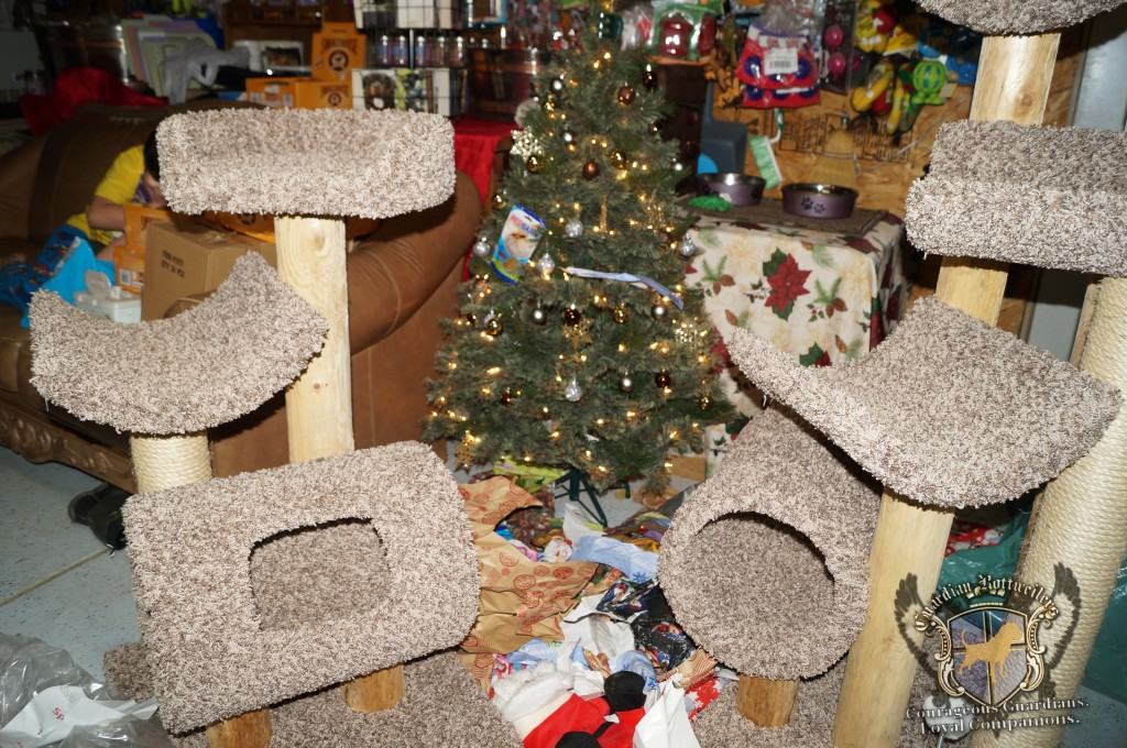 ChristmasMorning_2014_9953