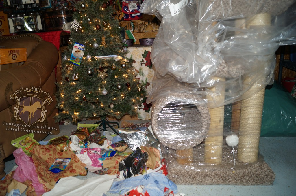 ChristmasMorning_2014_9957