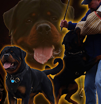 Our Rotties