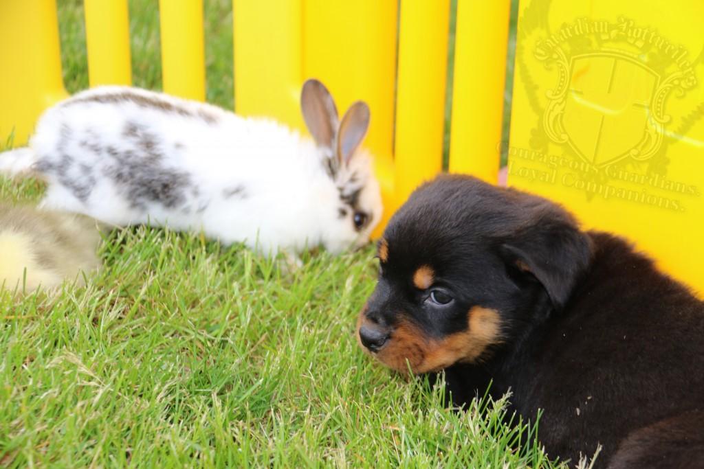 BunniesGeesePuppies05