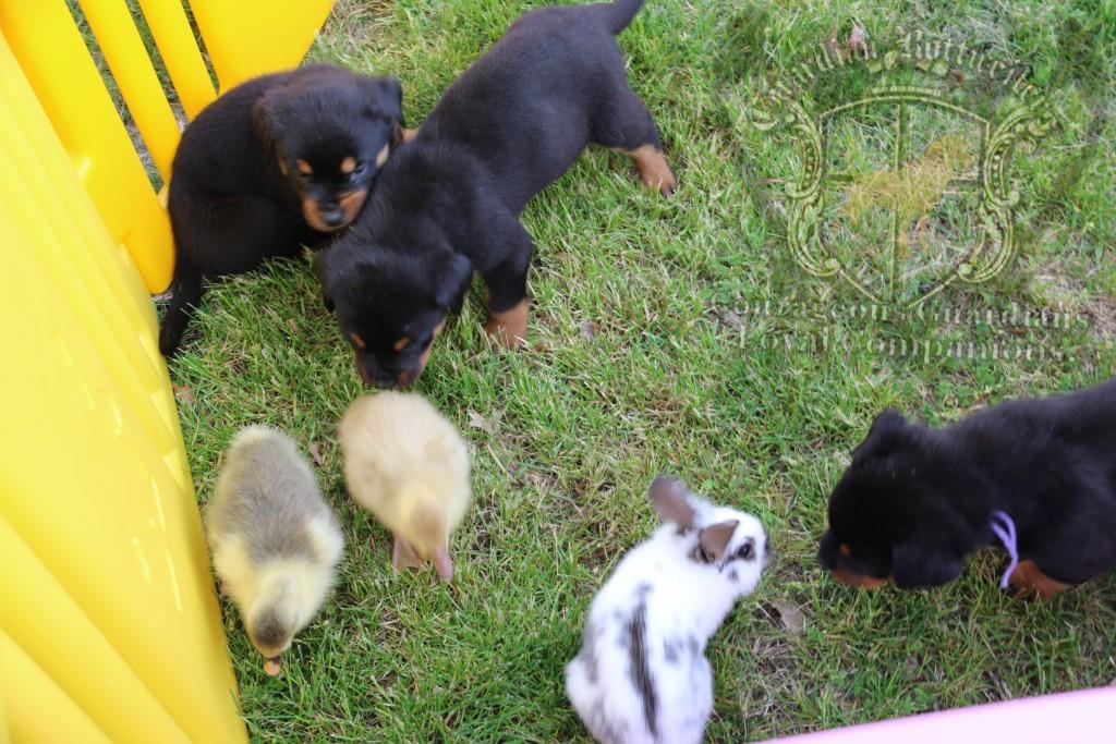 BunniesGeesePuppies16