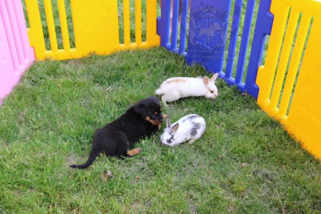 BunniesGeesePuppies21
