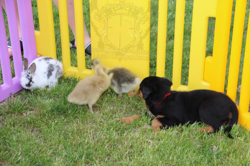 BunniesGeesePuppies31