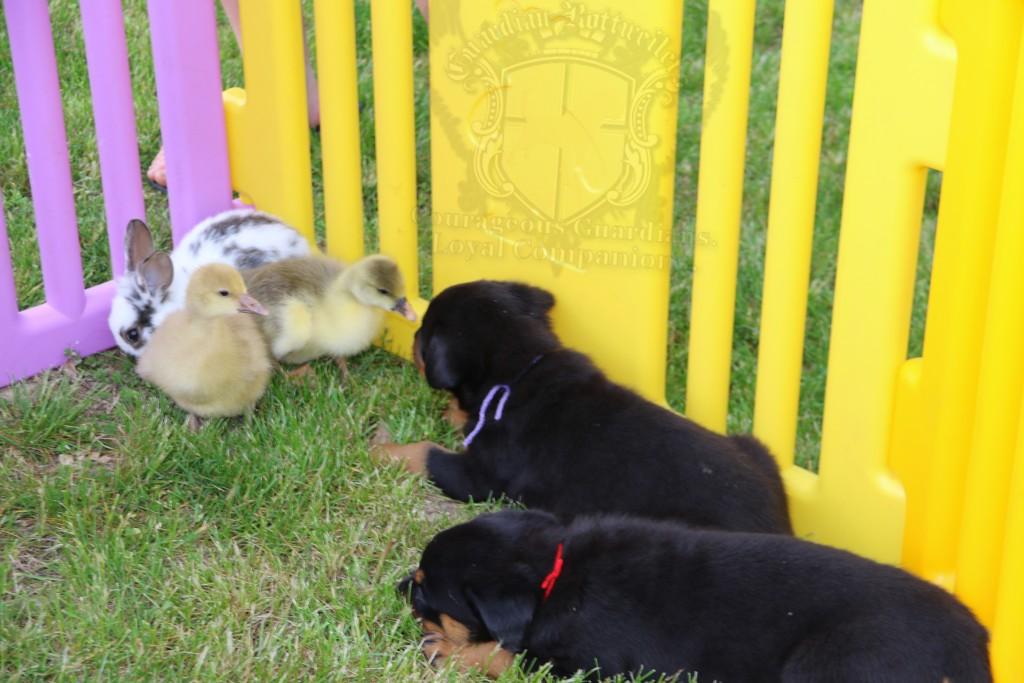 BunniesGeesePuppies34