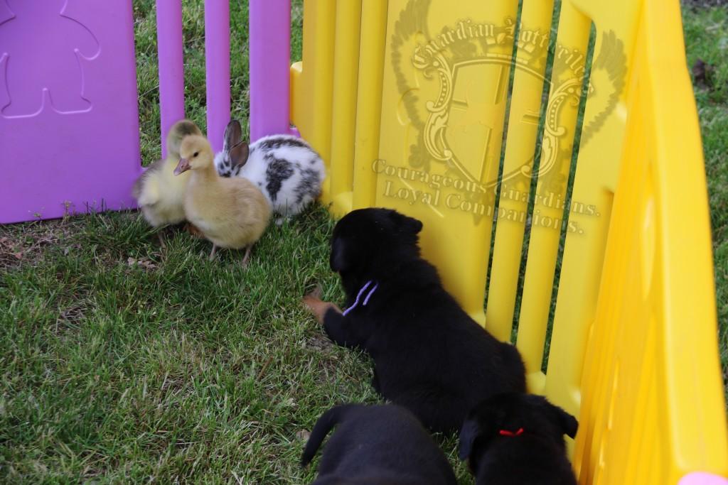 BunniesGeesePuppies36