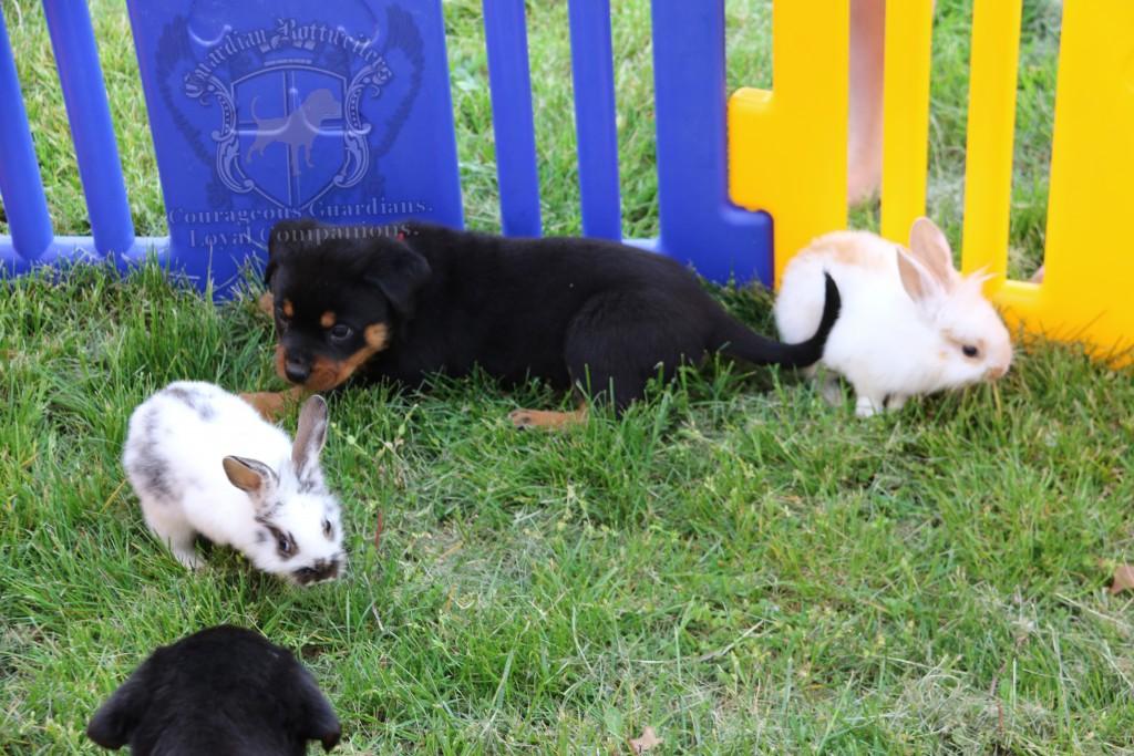 BunniesGeesePuppies38