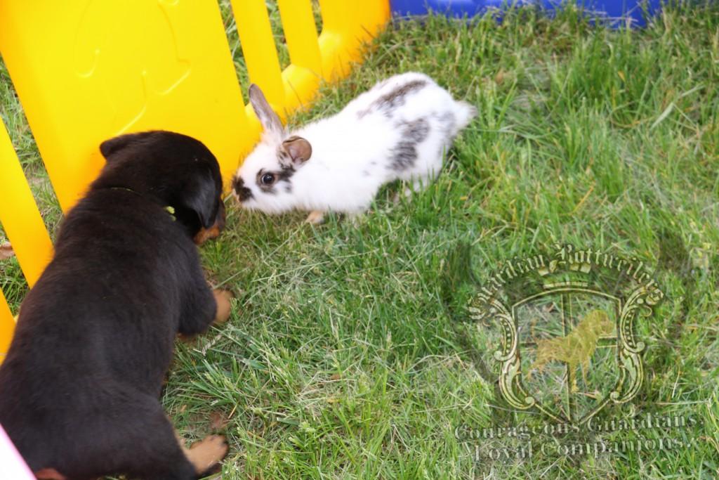 BunniesGeesePuppies39