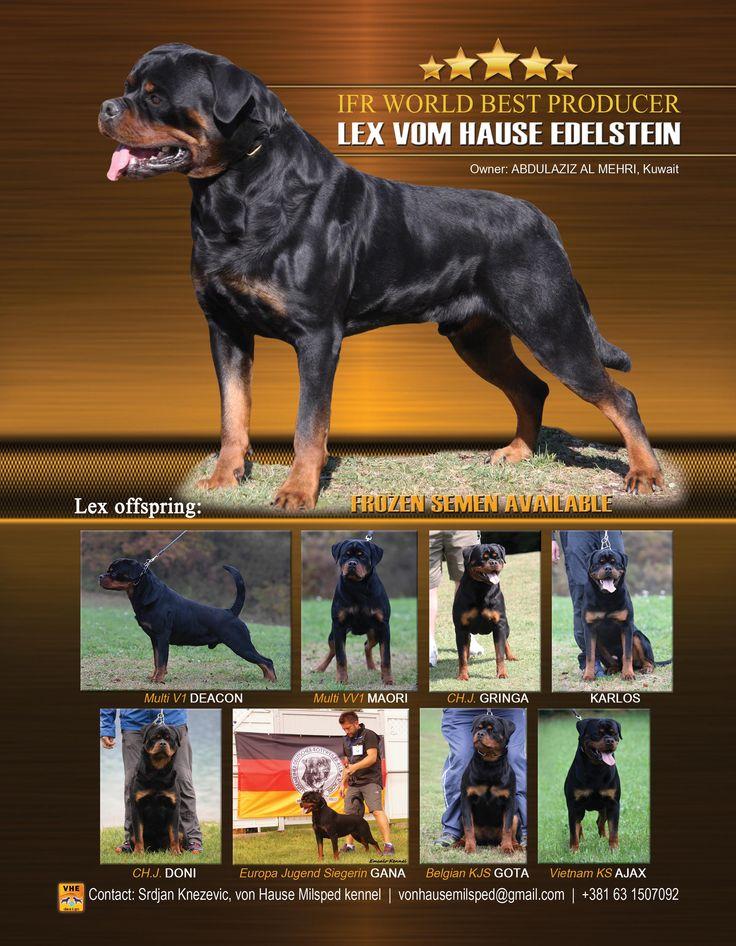 LexVomHauseEdelstein5