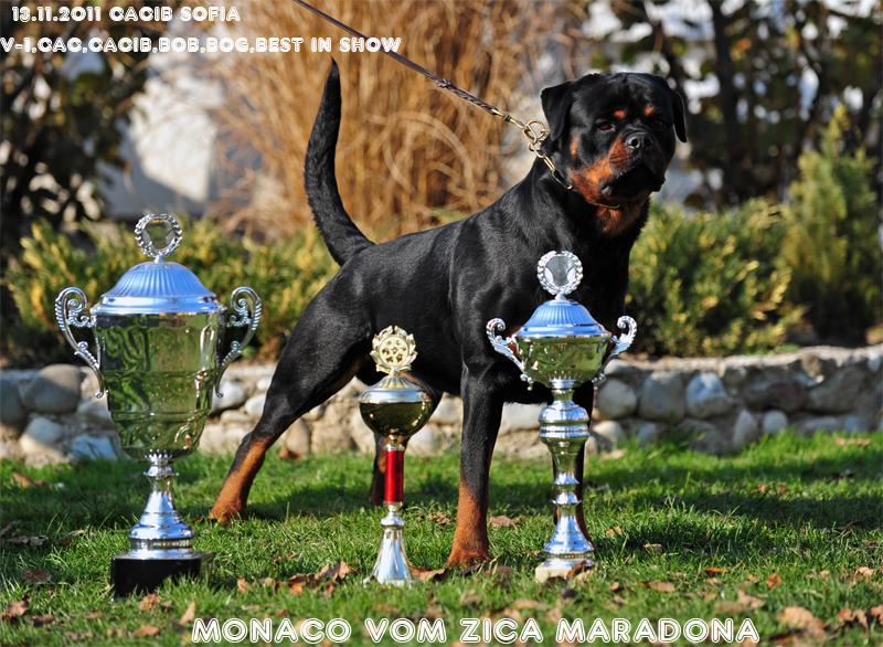 Monaco Vom Zica Maradona1