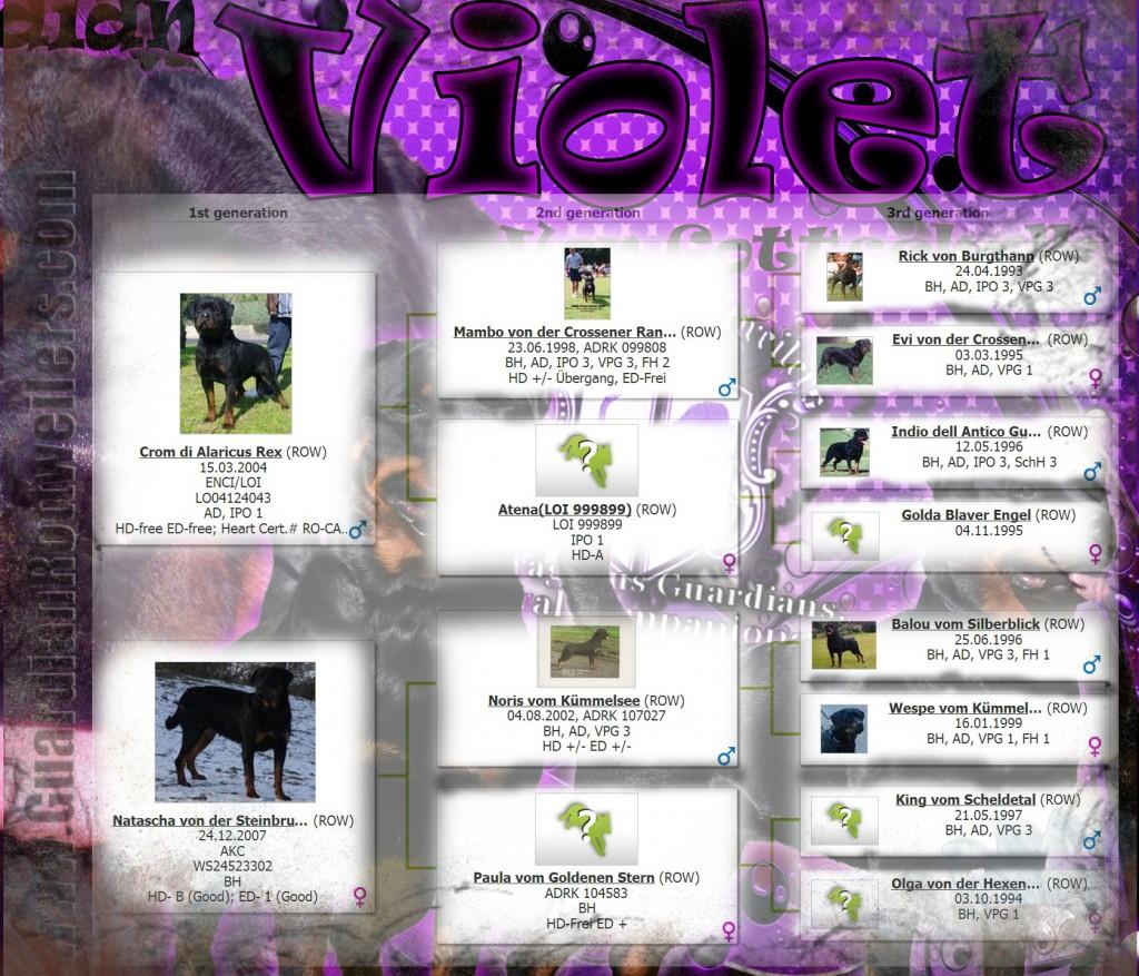 violet_ped01