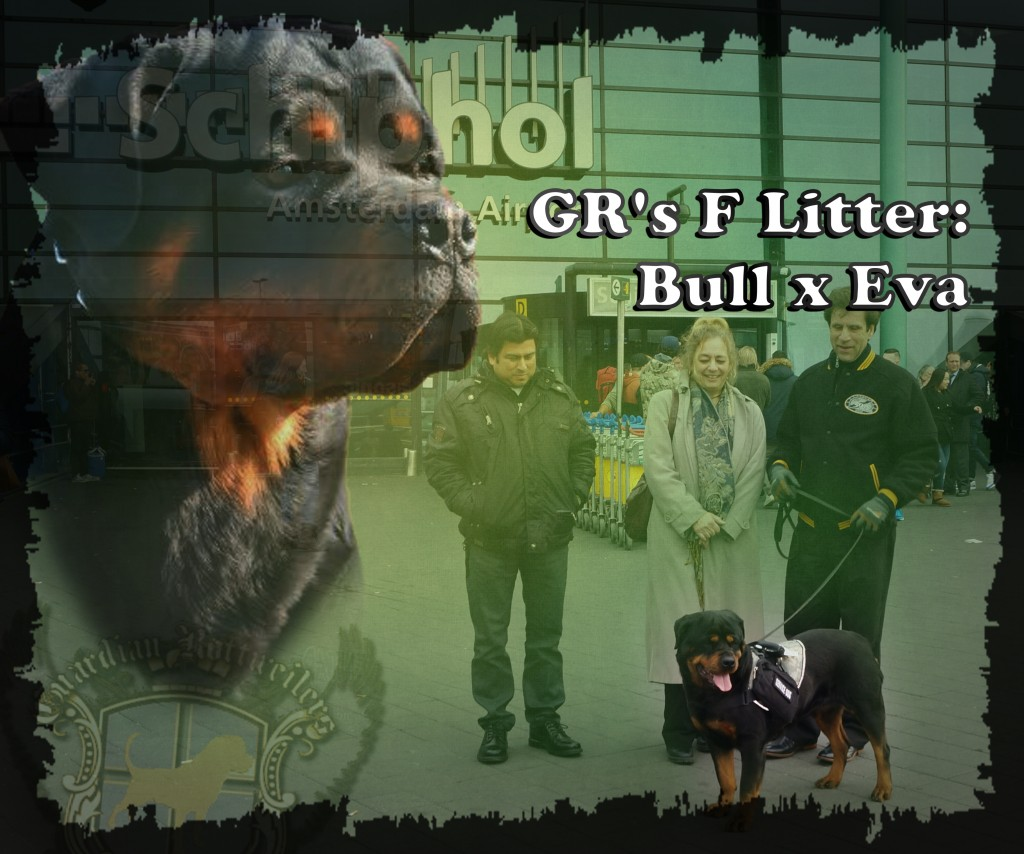 FLitter_Bull_Eva01