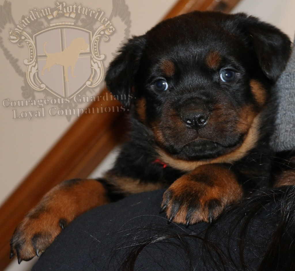 Grizzly6wk_05