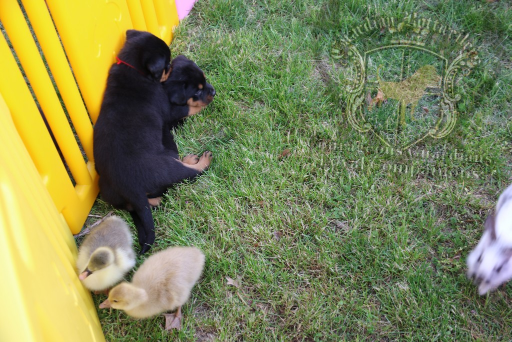 BunniesGeesePuppies19