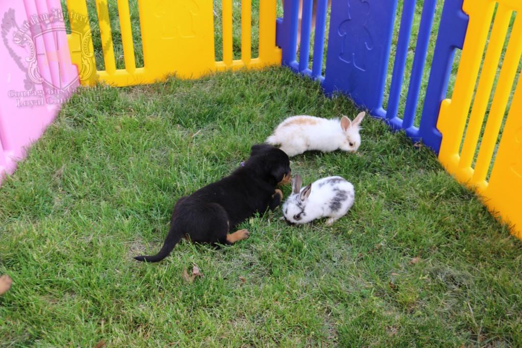 BunniesGeesePuppies22