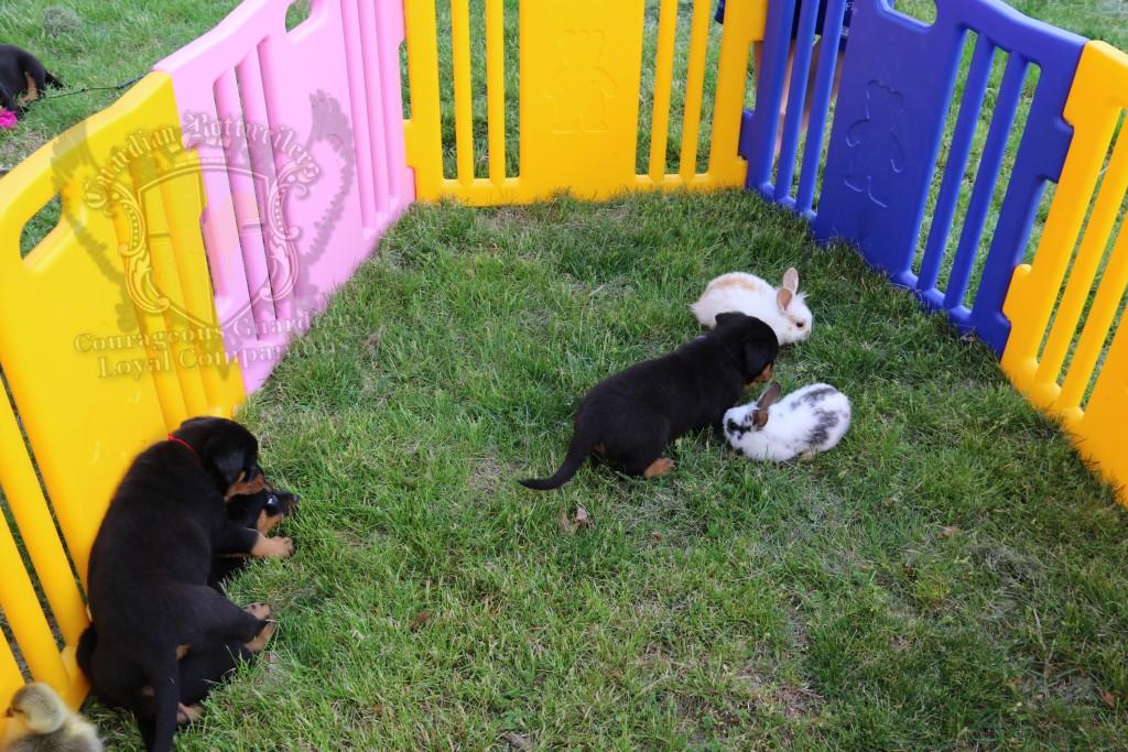 BunniesGeesePuppies23