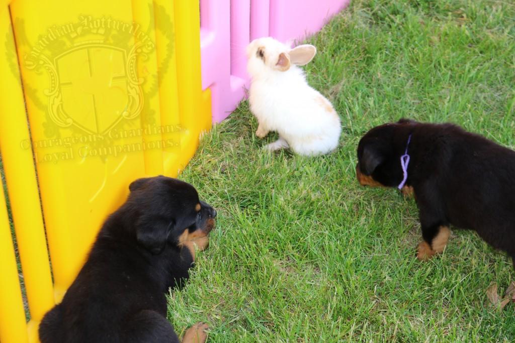 BunniesGeesePuppies27