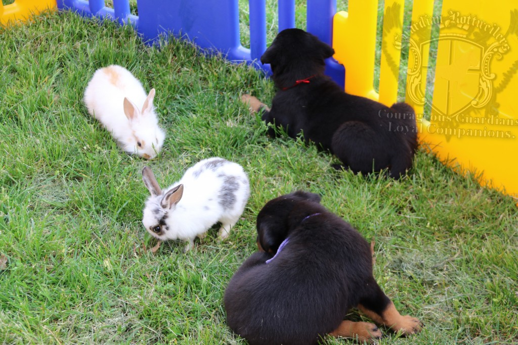 BunniesGeesePuppies28