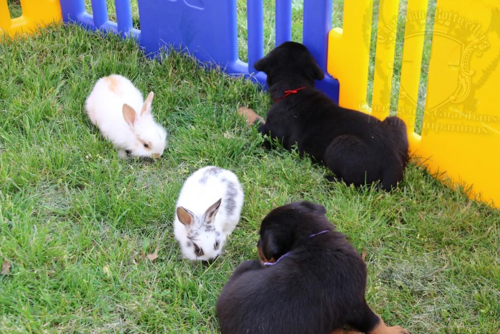BunniesGeesePuppies29