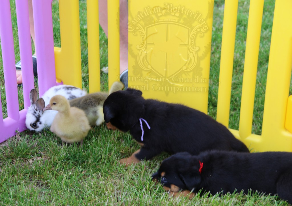 BunniesGeesePuppies33