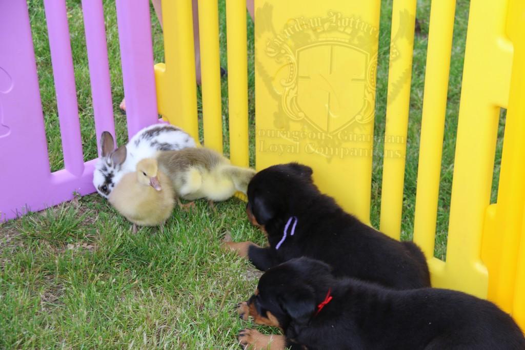 BunniesGeesePuppies35