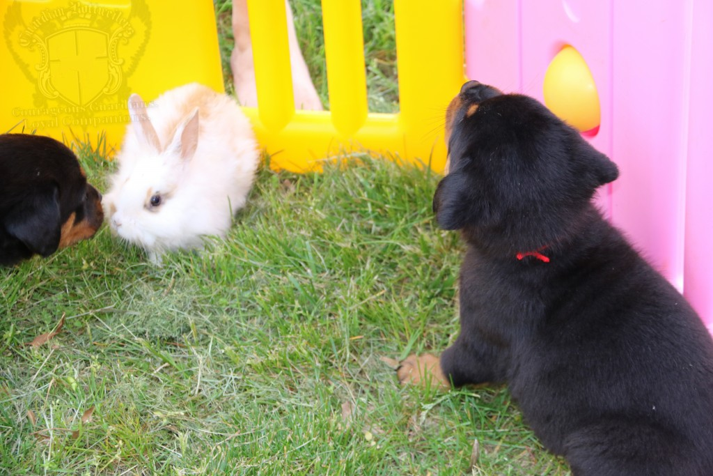 BunniesGeesePuppies41