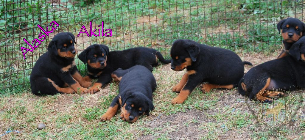 1BullAlka_all13
