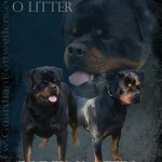 O Litter: Codex x Astra