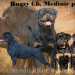 Import: Bugzy fh Medinic boys!